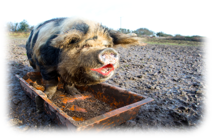 Lipstick on a Pig: 6 Weaknesses of Spreadsheet-based CAFR Solutions